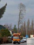 20160101-Baumverpflanzung-00062.jpg