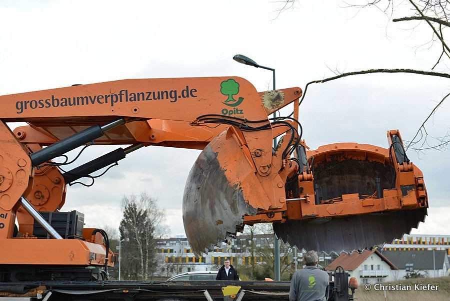 20160101-Baumverpflanzung-00017.jpg