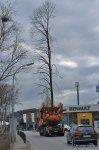 20160101-Baumverpflanzung-00061.jpg